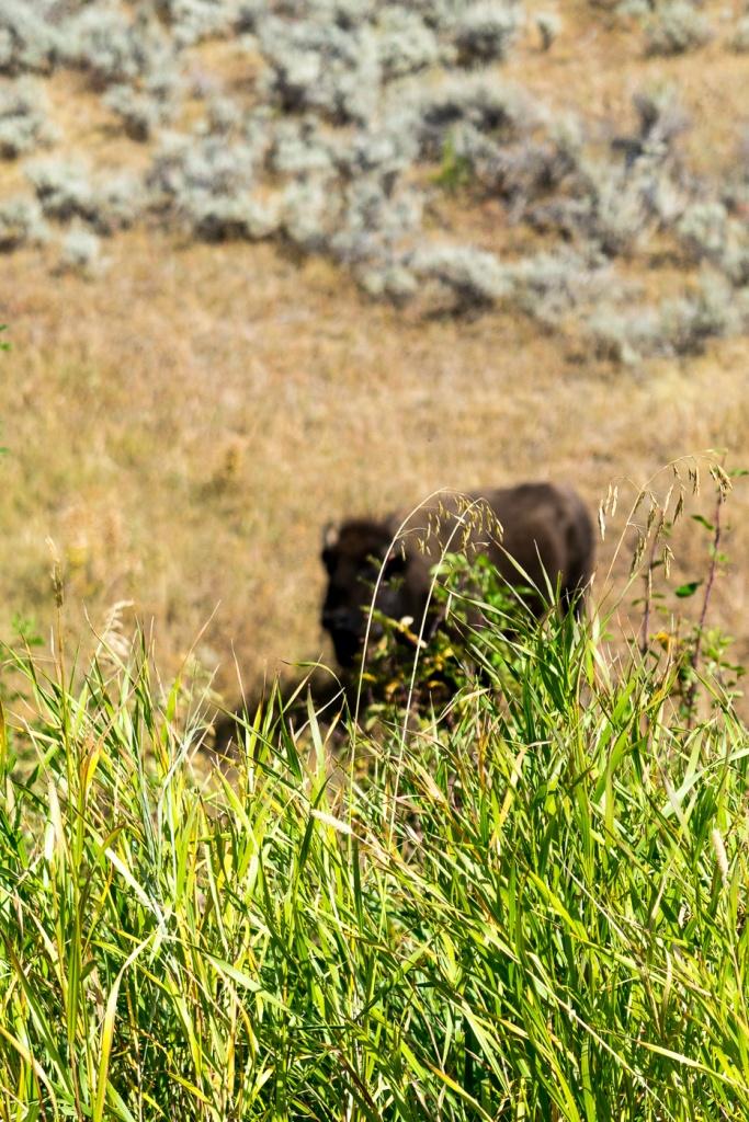 Yellowstone Day 3-425