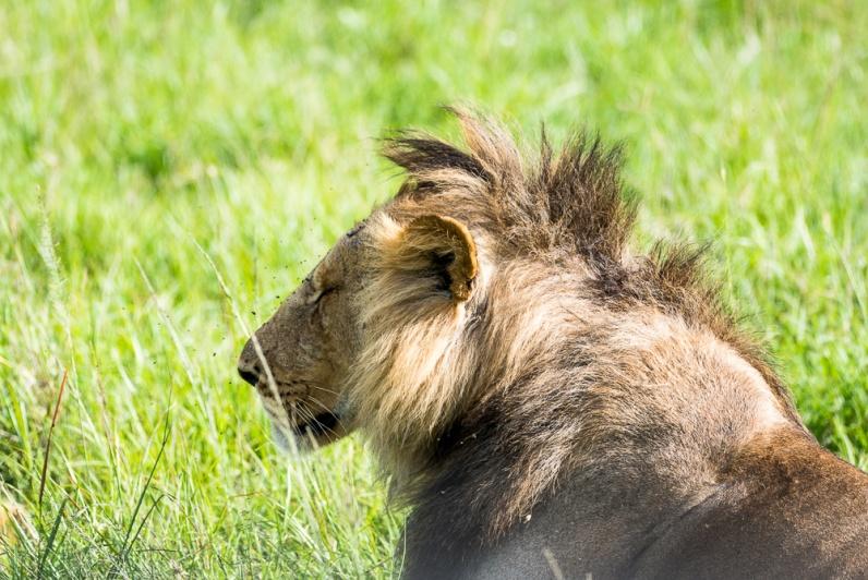 Masai Mara day 2-1241
