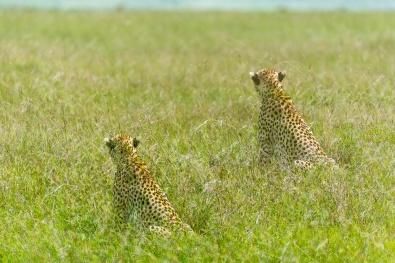 Masai Mara day 2-441