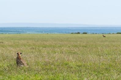 Masai Mara day 2-462