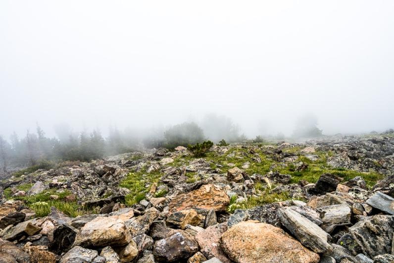 Twin Peaks RMNP-110
