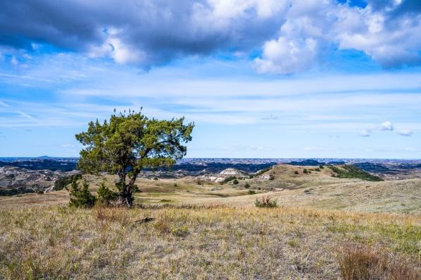 Theodore Roosevelt National Park-382